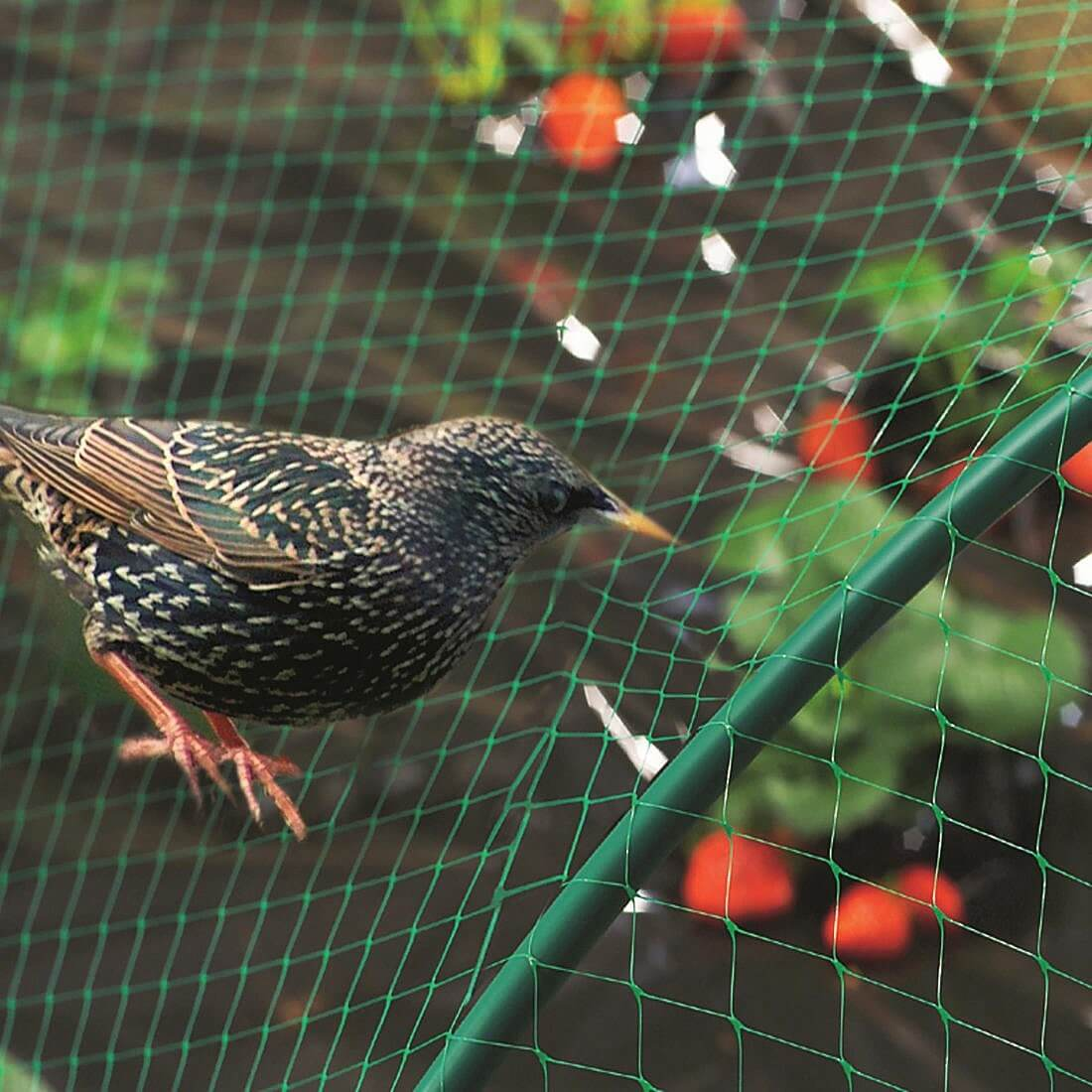 bird-netting